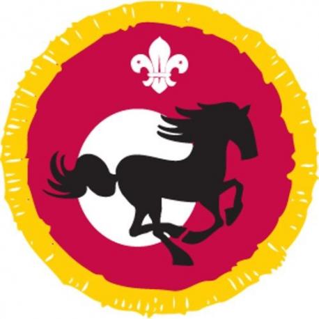 Cub Activity Equestrian